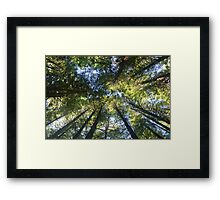 Redwood Forest Trees Framed Print