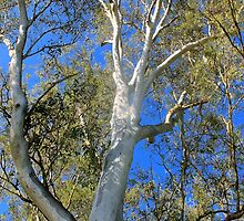 Ghost Gum by Margaret Stanton