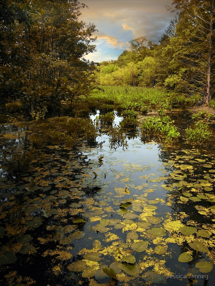 Wetlands by Jessica Jenney