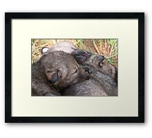 Furry Pillow Framed Print