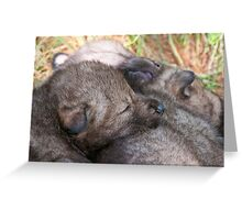 Furry Pillow Greeting Card