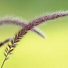 Grass? by okcandids