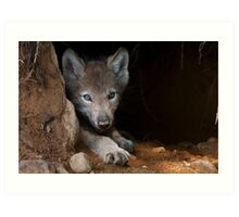 Timber Wolf Pup in Den Art Print
