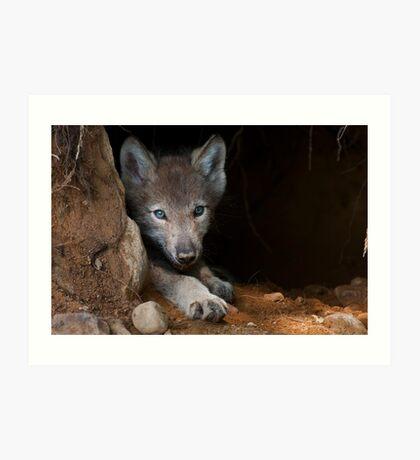 Timber Wolf Pup in Den Art Print