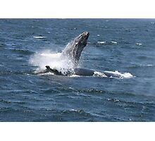 Momma Whale and her Calf Photographic Print