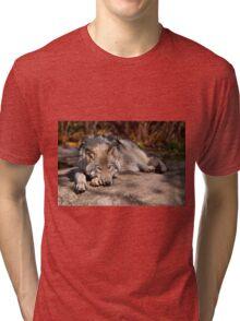 Timber Wolf At Rest Tri-blend T-Shirt