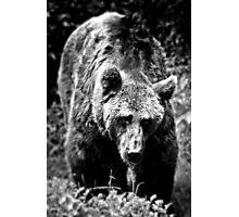 Bear Essentials Photographic Print
