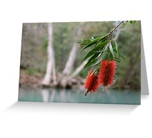 Bottlebrush, Stony Creek, Byfield NP.  Greeting Card