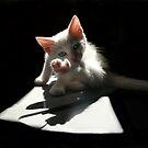 Cat Ballet by dimitris