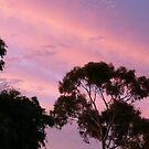 Sunset 1 by PurpleDonna