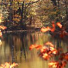 Golden Pond by rtishner1