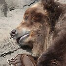 Sleeping Bear by Karl R. Martin