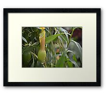 Pitcher Plant or Pokemon? Framed Print