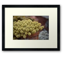 Cacti or Fuzzy Pickles? Framed Print