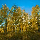 Fall Colors in the Country by Luann wilslef