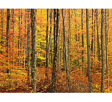 The Golden Forest Photographic Print