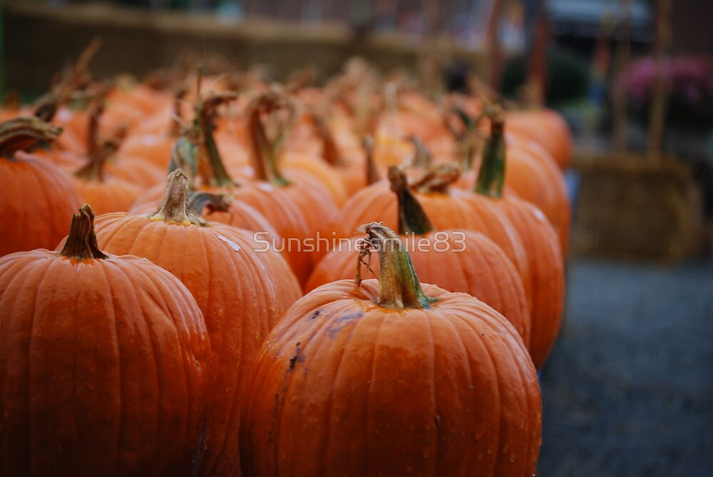 Pumpkins to Pick by Sunshinesmile83