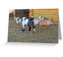 Baby Goats Greeting Card