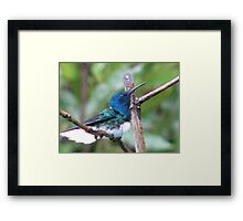 Jacobin at rest Framed Print