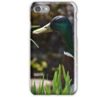Peeking Mallard iPhone Case/Skin