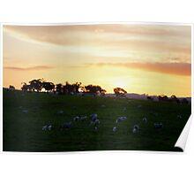 Sheepish Sunset Poster