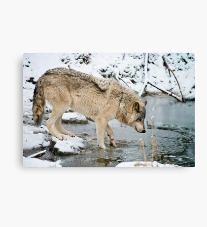 OHHH, That's Cold Canvas Print
