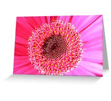 Very pretty in hot pink Greeting Card