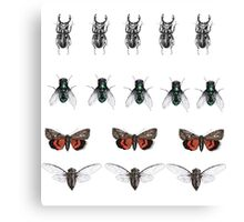 Repeated insect illustration  Canvas Print