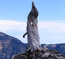 Lone grandfather stump Rises to the sky at Crater Lake by Pam2t1968