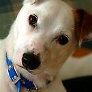 My Bumpy Dog by Penny Smith