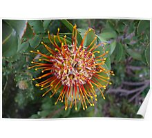 Stripey Flower Poster