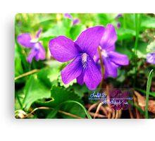 little violets  Canvas Print