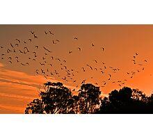 Corella Sunset Photographic Print