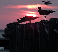 Seagull Sunset by Lolabud