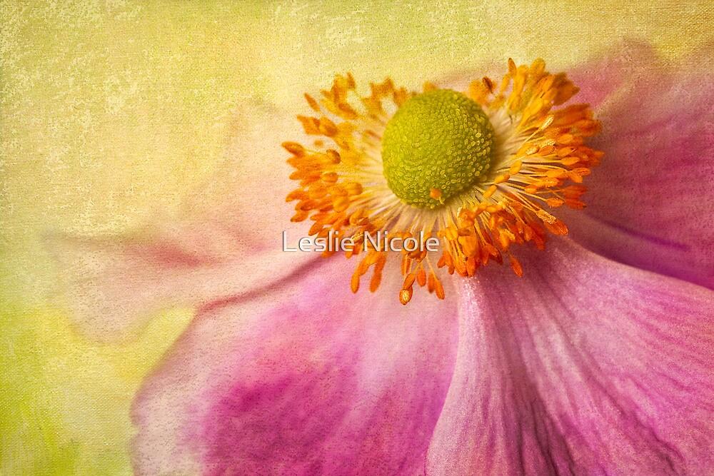 Anemone Glow by Leslie Nicole