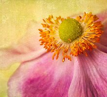 Anemone Glow by Leslie Nicole