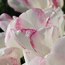 Blushing by Natalie Cooper