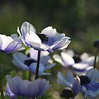 Blue by salsbells69