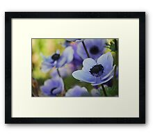 Blue Poppies Framed Print