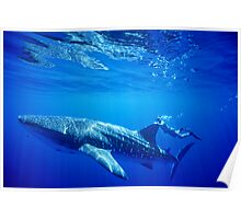 Shark Ride! Poster