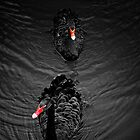 Dark Water Swan by Erin Valickis