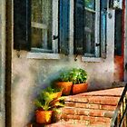 Flowers - Plants - The Stoop  by Mike  Savad