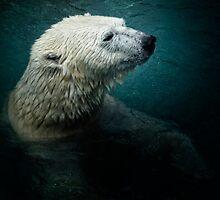 Polar Nights by Erin Valickis