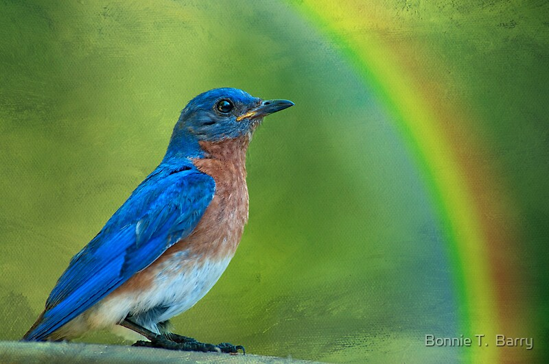"""Somewhere over the rainbow, bluebirds fly . . ."" by ..."