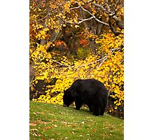 Autumns Harvest Photographic Print