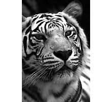 Ivory in black and white  Photographic Print