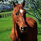 Red Equine by Mattie Bryant