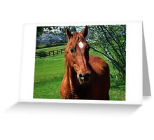Red Equine Greeting Card