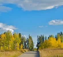 High Country Road by Luann wilslef