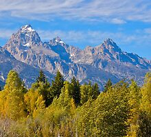 Moose Wyoming by Luann wilslef